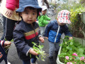 小松菜収獲