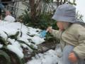 雪遊び: 葉っぱの上にも雪がどっさり積もってる